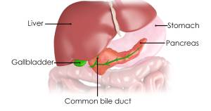 Hepato-Biliary and Pancreatic Surgery